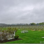 North Fork Wine Country–Family Time or Romance?